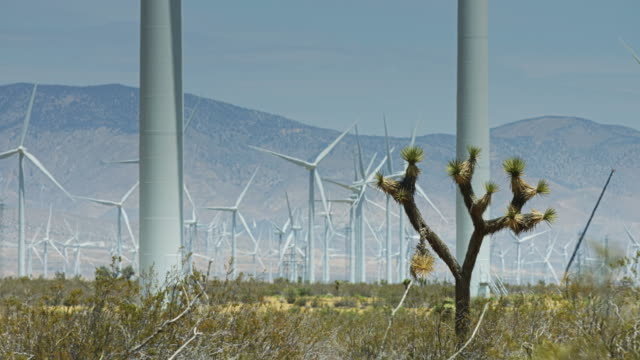 Joshua Tree in Shadow of Wind Turbines video