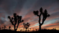 Joshua Tree National Park Sunrise video