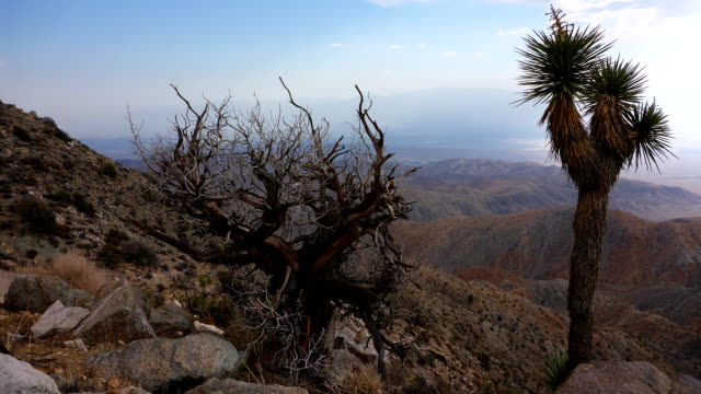 Joshua Tree National Park time lapse video
