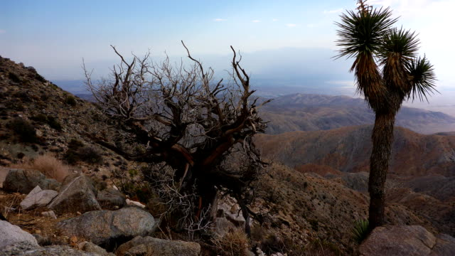 Joshua Tree National Park time lapse with Juniper in foreground video