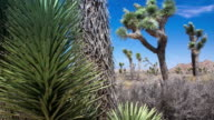 Joshua Tree National Park. video
