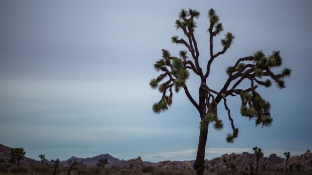 Joshua Tree Sunset - Time Lapse video