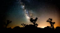 TIME LAPSE: Joshua Tree under Milky Way video