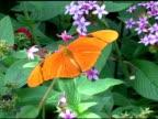 Julia Butterfly 1 NTSC video