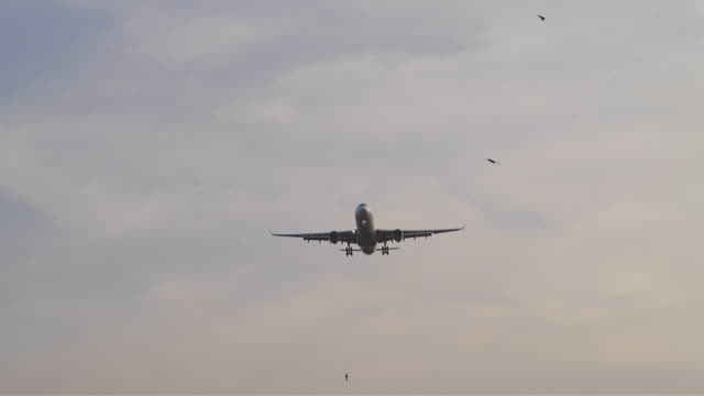Jumbo jet airplane landing video