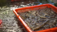 Jumping live seafood shrimp in Chinese market. Hand taking prawn for sell video