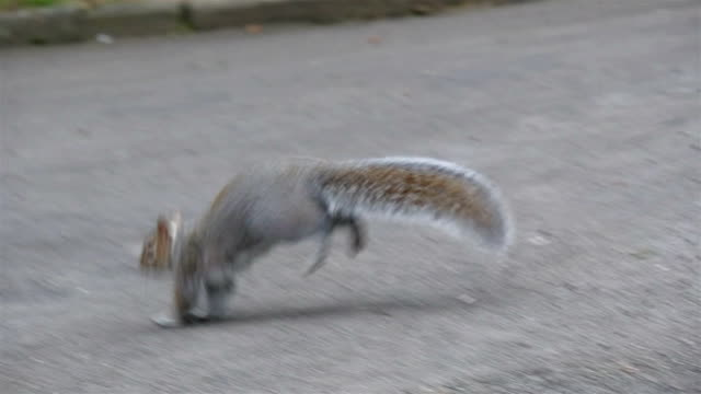 A jumping squirrel on the road inside the cemetery video