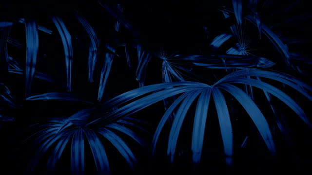 Jungle Ferns In Breeze At Night video