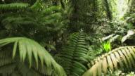 Jungle HD video