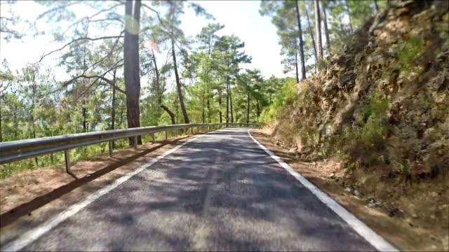 Jungle road video