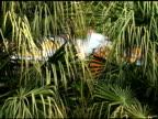 Jungle Surprise video