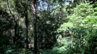Jungle tilt up Grass, leaves and tree trunks in tropics. video