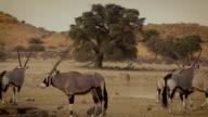 Kalahari scenerie video