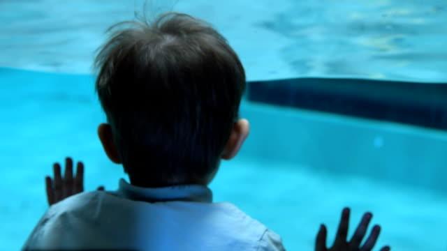 Kid looking at Humboldt penguins swimming underwater in pool video