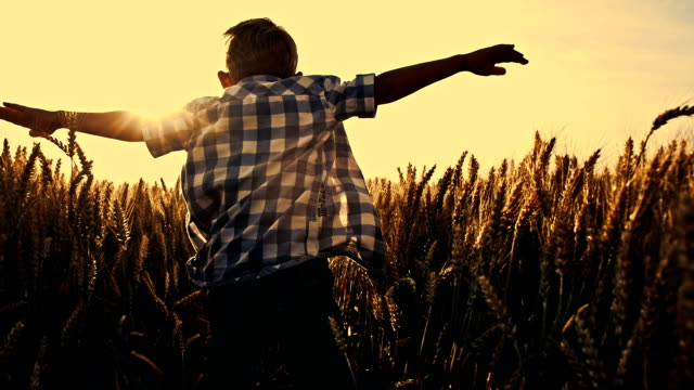 SLO MO Kid running through wheat field with arms outstretched video