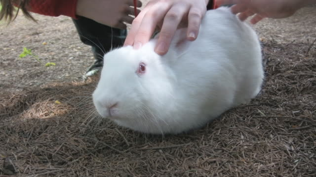 Kids and rabbit video