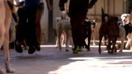 Kids running with the dogs video