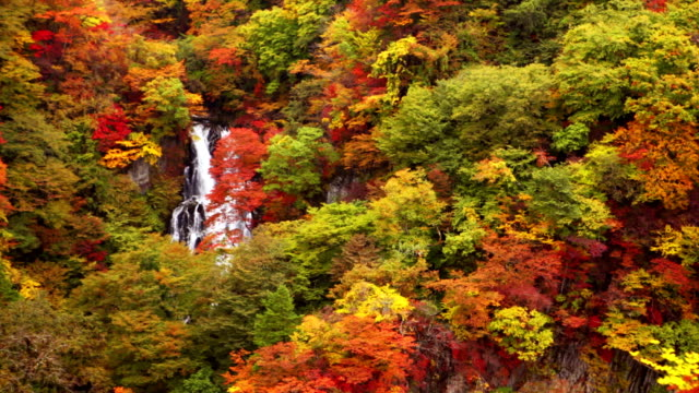 Kirifuri Falls near Nikko, Japan in autumn video