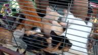 Kitten at cage on market video