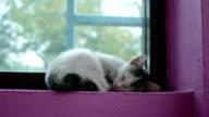 kitten cat sleeping video