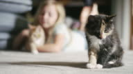 A kitten cleaning himself, with a little girl petting a kitten in the background video