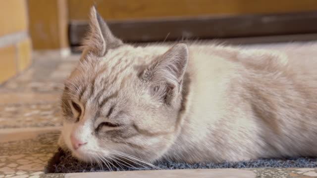 Kitten lying on the porch video