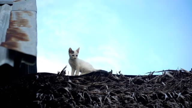 Kitten on the roof video