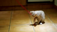 Kitten playing on the floor in the home. Slow Motion video