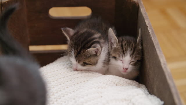 Kittens huddled together sleeping on a blanket video