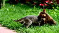 Kittens in garden video