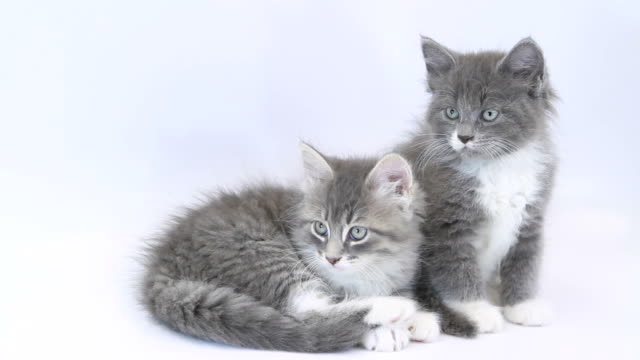 Kittens video