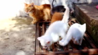 kittens with their mother cat video