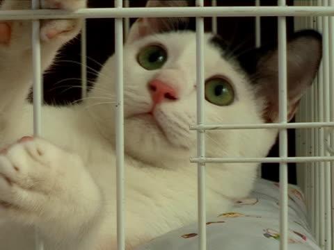 Kitty Alert Close-Up (2 cuts) video