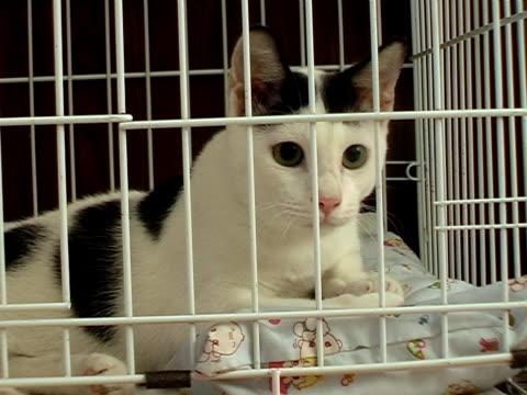 Kitty Alert video