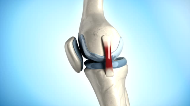 Knee medical anatomy in loop video