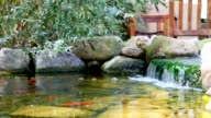 Koi pond waterfall in garden video