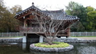 Korean temple with pond, early morning, dolly shot video