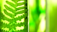 Laboratory, Fern, lavender, rosemary and mint in test tubes video