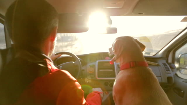 Labrador at the road from the passenger seat video