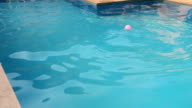 Labrador Retriever jumping in the pool video
