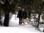 Labrador Snow video