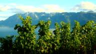 Lac leman at dusk, Villette video