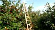 Ladder with Apple Trees video