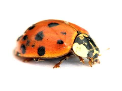 PAL: Ladybug video