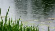 lake and rain video