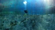 Lake diving video