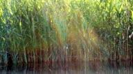 Lake grass pan with sun beams video
