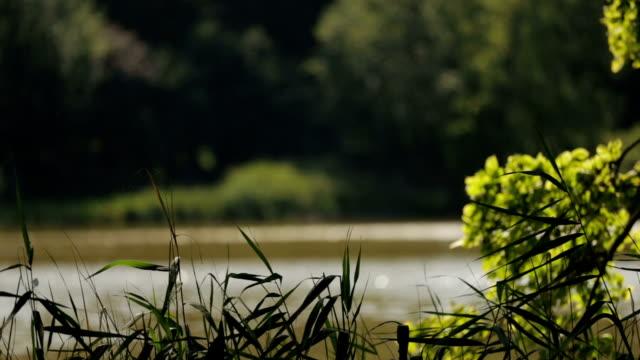 Lake - Stock footage video