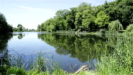 Lake surrounded by forest. Twigs of willow over the water. video