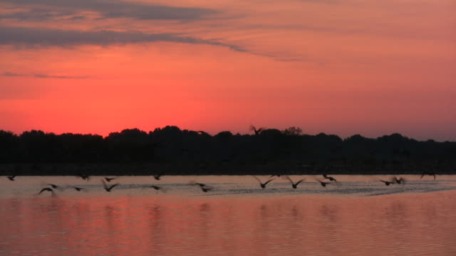 Lake Water Sunrise. Birds Fly by. video